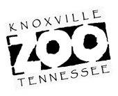 Knoxville Tennessee Zoo web design case study